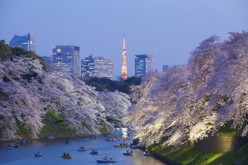 Beautiful sakura cherry blossom light up and Tokyo Tower