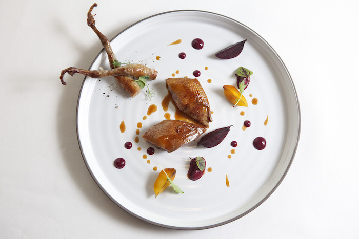 Blood Pigeon Caprice