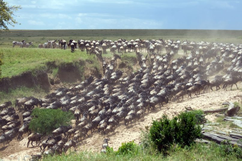Crystal AirCruises - The Great Migration in Kenya