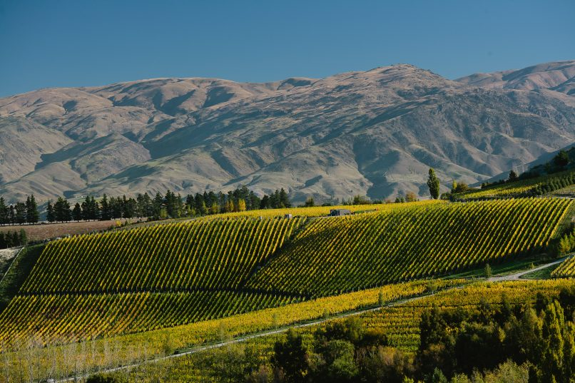 new zealand winery tours