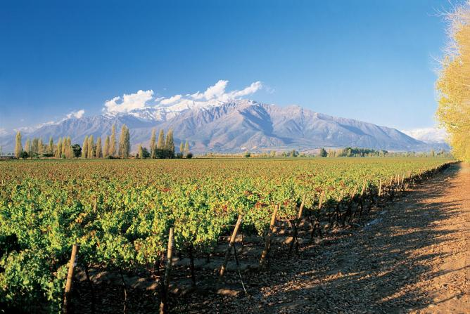 chilean wines china