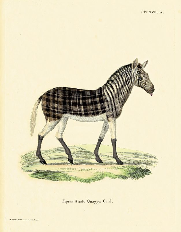 Image of: Step One Of The Drawings Depicting The Aristo Quagga Zebralike Mammal With An Interesting Mix Of Stripes Homegrown Marcel Wanders Celebrates Extinct Animals In His Latest Collection