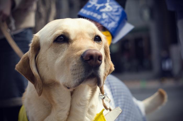 Hong Kong Guide Dogs Association
