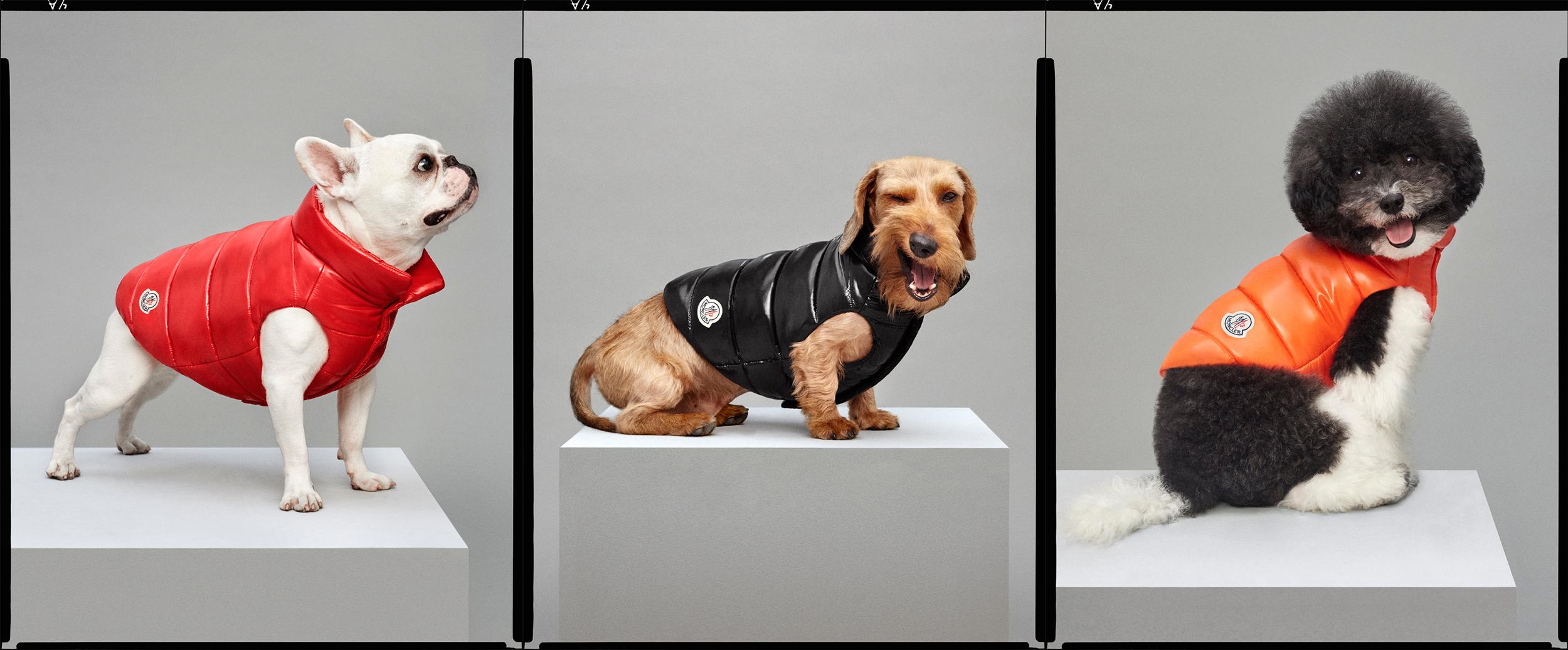 moncler poldo dog couture the cheat sheet