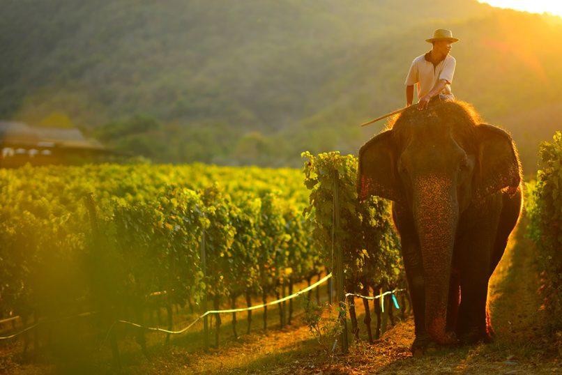 monsoon valley Thailand vineyards