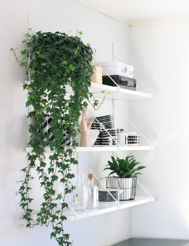 Admirable How To Decorate A Minimalist Home With Indoor Plants Download Free Architecture Designs Scobabritishbridgeorg