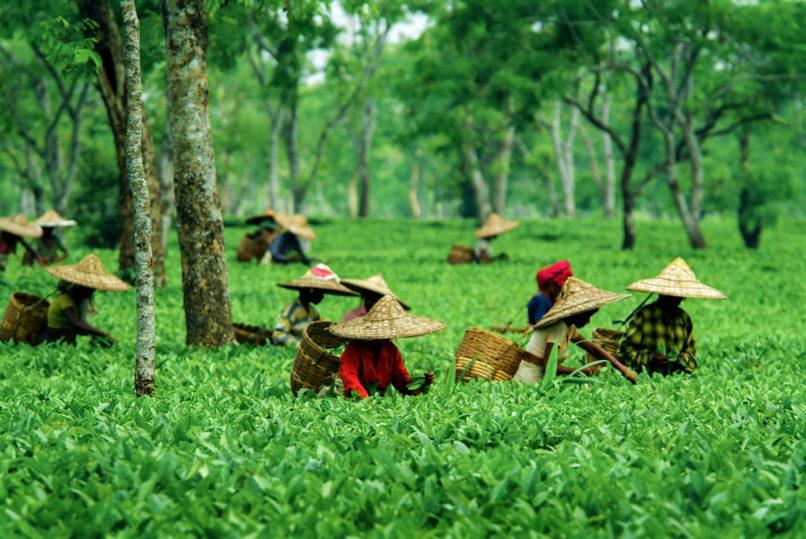 Assam, Top travel destinations India