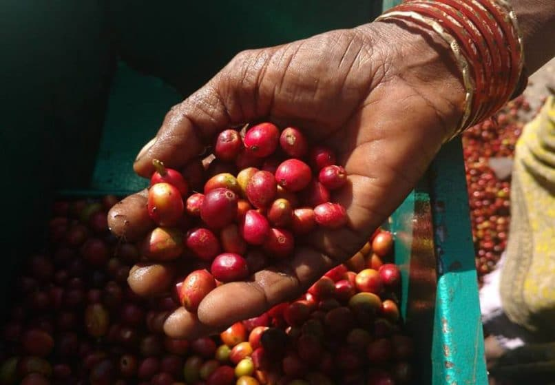 best artisanal coffees India. Black Baza coffee