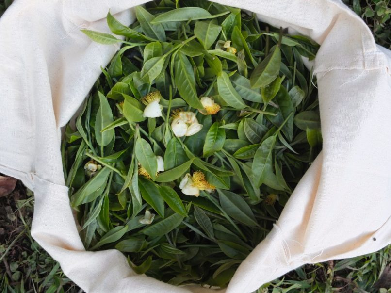 Cha Ling - pu'erh tea