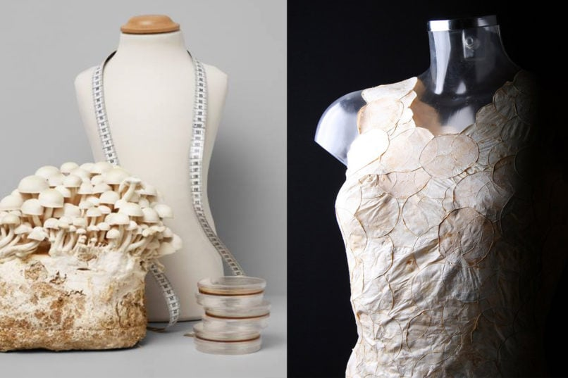 MycoTEX material made out of mycelium, the roots of mushrooms and a bodice featuring a garment prototype made out of MycoTEX material