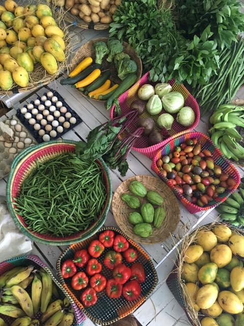 organic farms in India