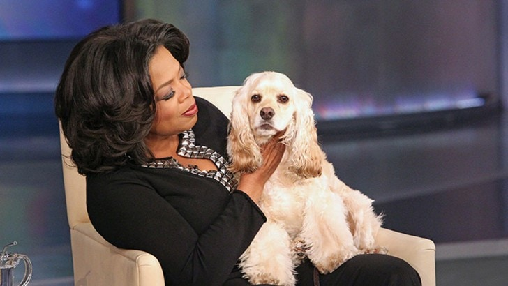 Fashionable Dog breeds Cocker Spaniel