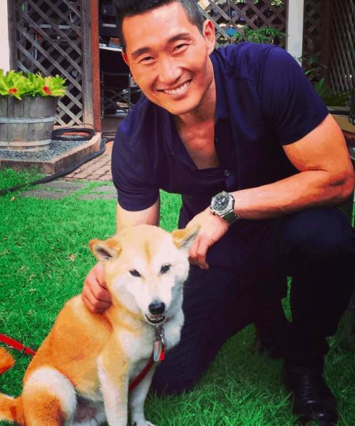 Fashionable Dog Breeds Shiba