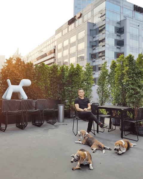 Fashionable Dog Breeds Beagle