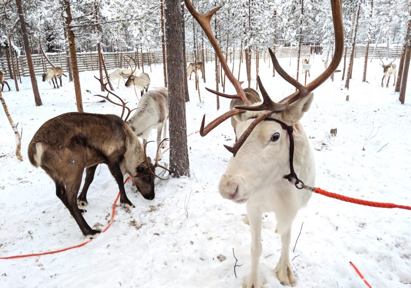 Finland Travel Guide: Lapland