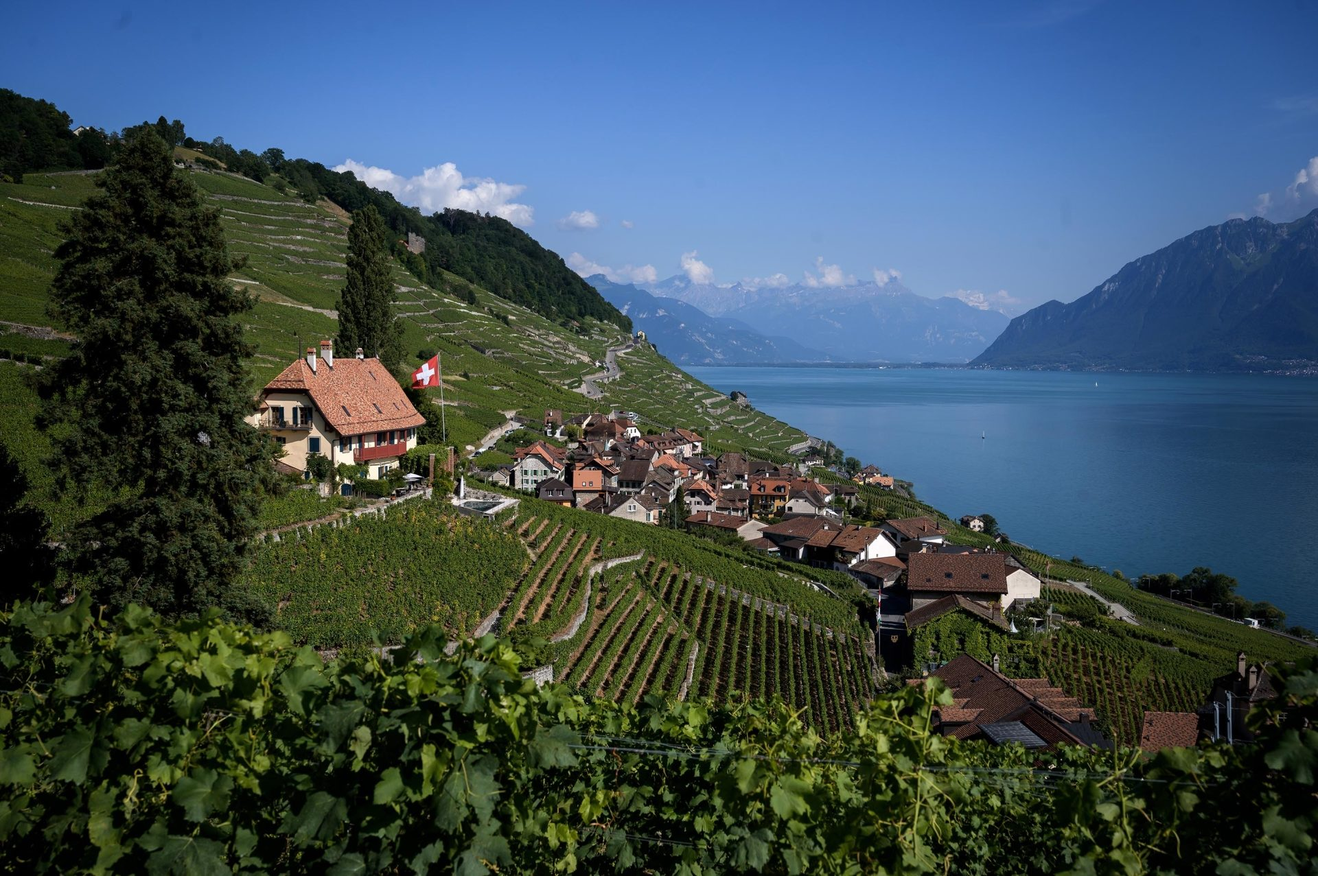 SWITZERLAND-VINICULTURE-LIFESTYLE-TRADE