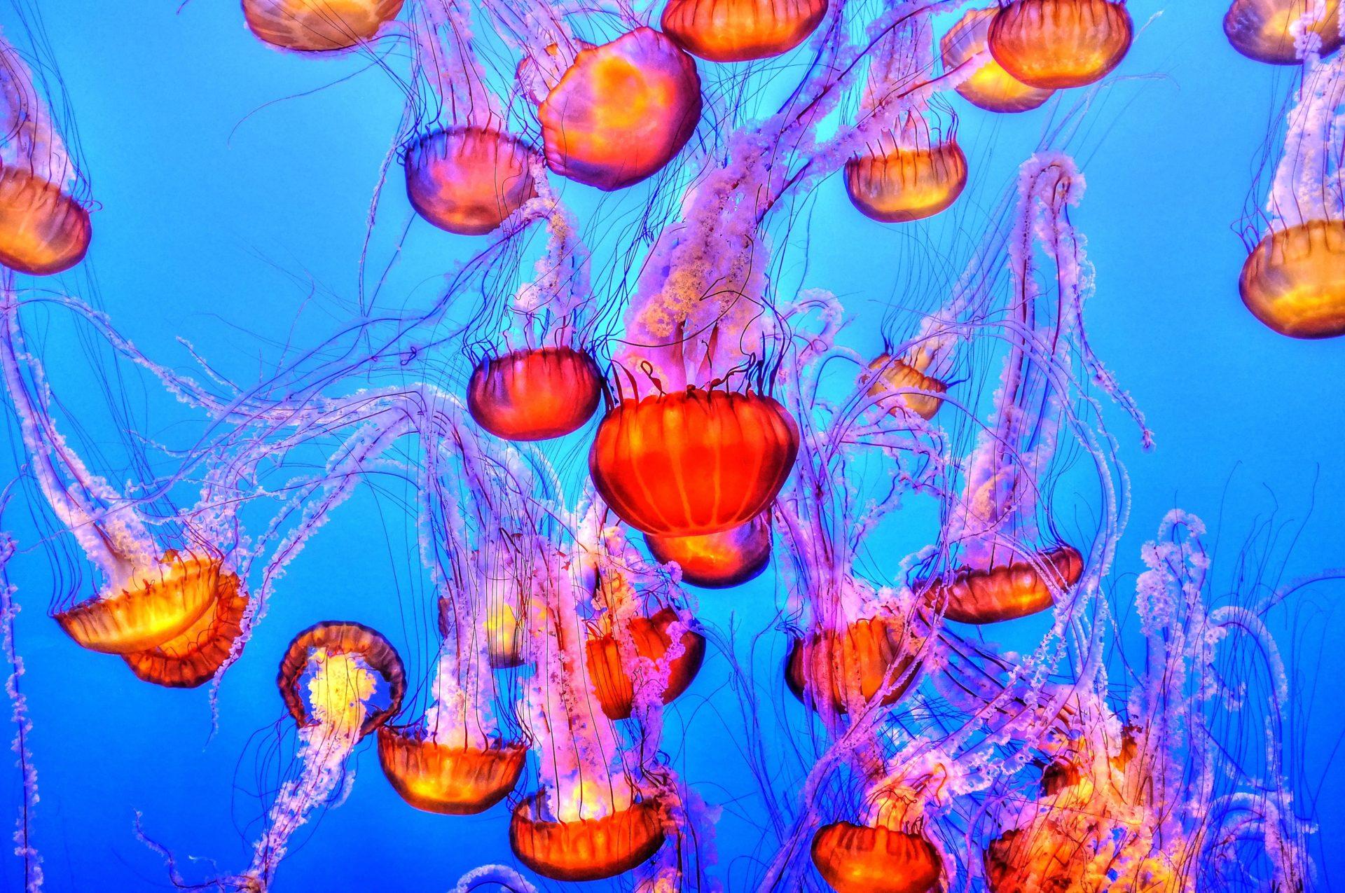 Underwater Restaurant Phuket